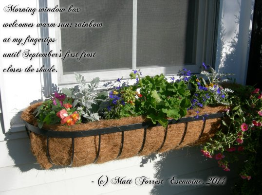 Window Box graphic