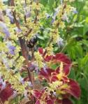 Flowers & Bee
