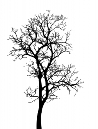 ID-100227497 (tree)